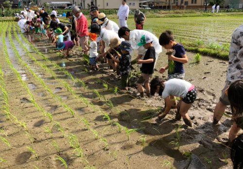 田植祭、お田植え体験